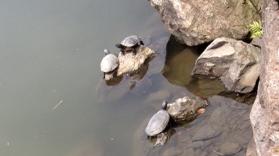 14420-turtles